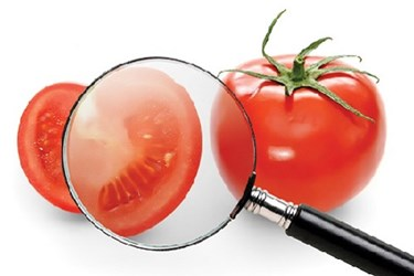 Food Safety Inspection Traceability Tomato