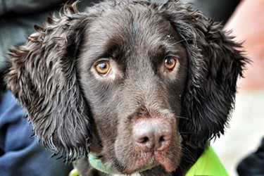 Sniffer Dogs Now Being Used To Detect Water Main Leaks