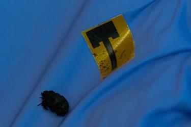 nanotube-antenna