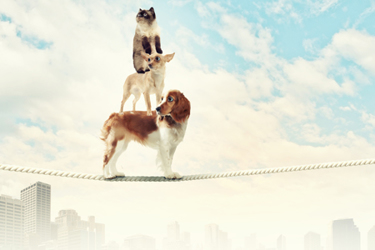 spaniel dog balancing on rope.jpg