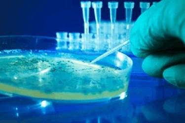 Petri Dish Testing