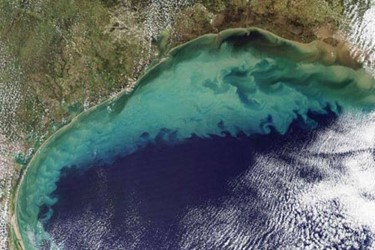 Gulf Of Mexico's Hypoxic Zone Larger Than Ever
