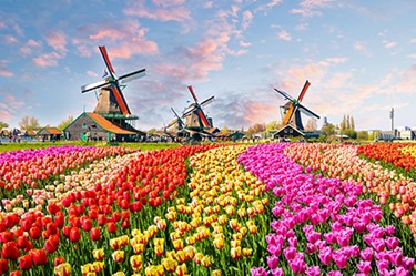 Netherlands_Windmill_tulips_450x300