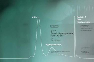 Process Development And Scale-Up Of Ceramic Hydroxyapatite