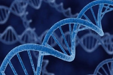 DNA gene patents and biotechnology