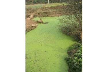 Phosphorus Pollution