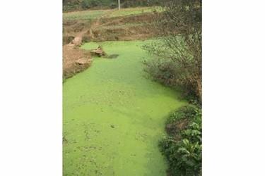 Phosphorus Pollution