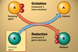 Schematic of Oxidation Reduction