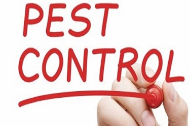 Update Current Preventive Controls To Bolster Your Pest Control Programs