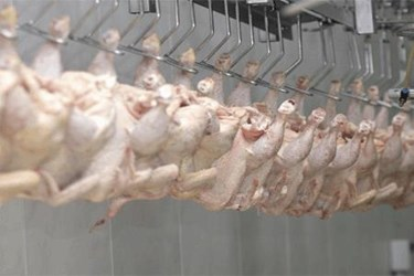 In-LineContaminationDetectionPoultryManufacturers