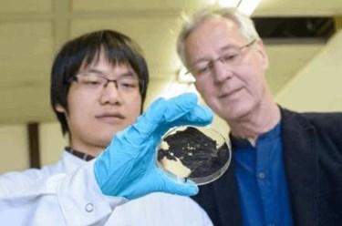 ultrathin-superconduct