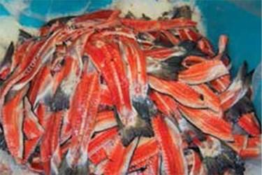 """""""N"""" Pump Handles Atlantic Salmon Waste"""