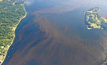 NOAA algae