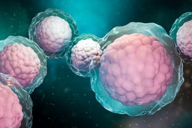 Stem Cell Brain
