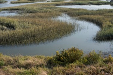 istock_wetlands
