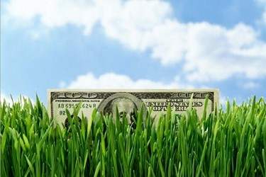 Money Peeking Out of Tall Grass