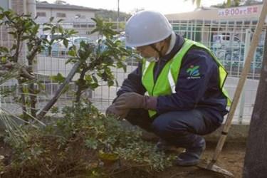 microalgae-and-aquatic-plants-can-help-clean-radiopollution-at-fukushima