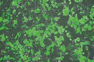 greencells