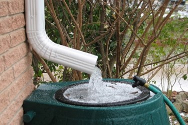 rain-barrel-crop