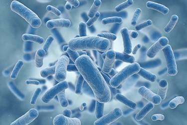 Infectious Disease